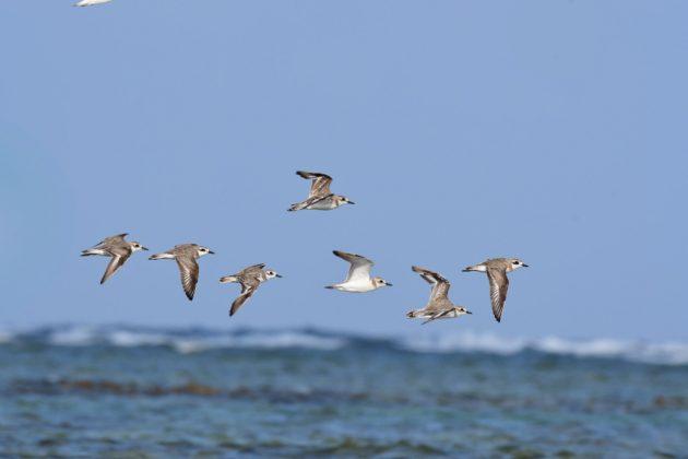 716-石垣島-野鳥4
