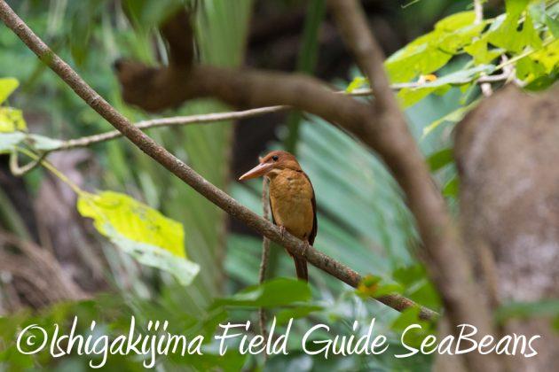 7.18 バードウオッチング 野鳥撮影 ガイド 13