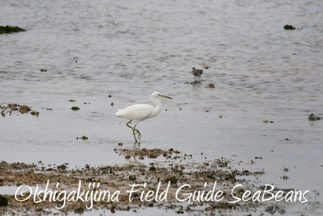 7.18 バードウオッチング 野鳥撮影 ガイド 9