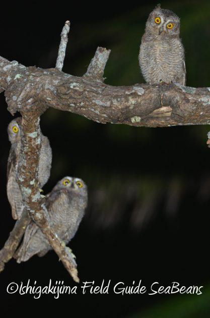 715野鳥観察 ナイトツアー8