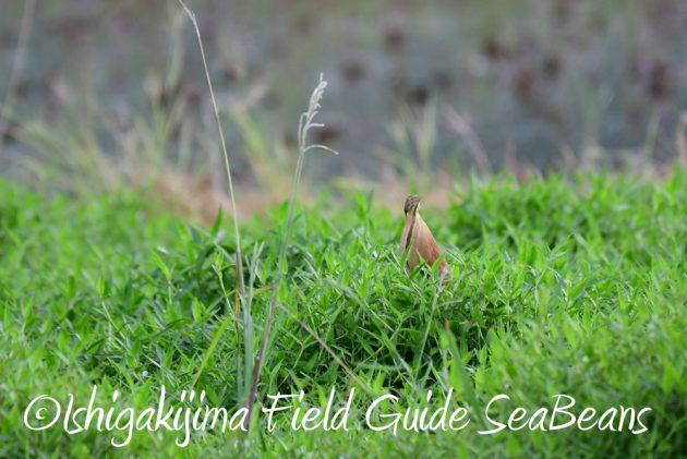 7.18 バードウオッチング 野鳥撮影 ガイド 4