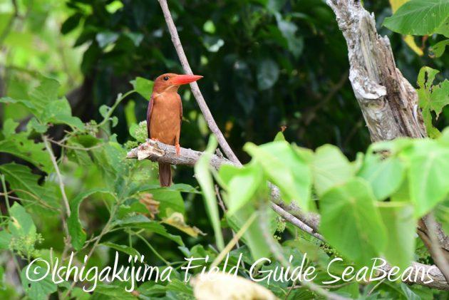 7.18 バードウオッチング 野鳥撮影 ガイド 12