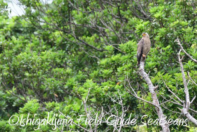 7.18 バードウオッチング 野鳥撮影 ガイド 15