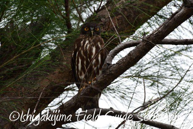 7.18 バードウオッチング 野鳥撮影 ガイド 6
