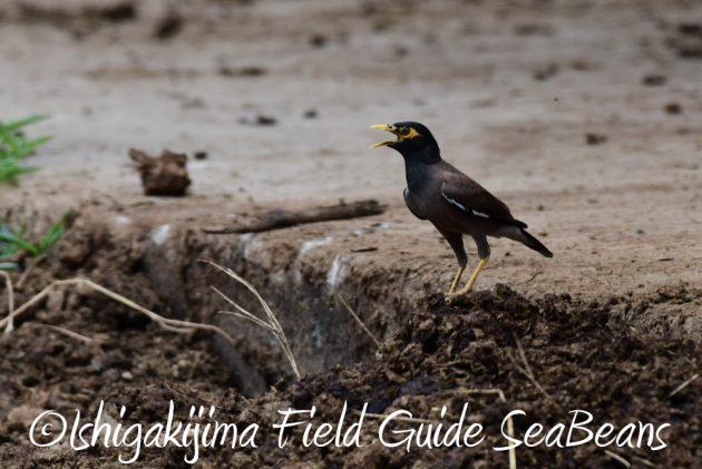 7.18 バードウオッチング 野鳥撮影 ガイド 17