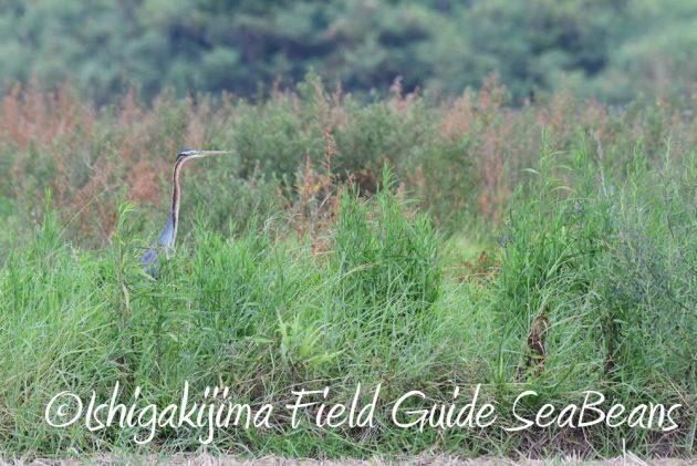 7.18 バードウオッチング 野鳥撮影 ガイド 5