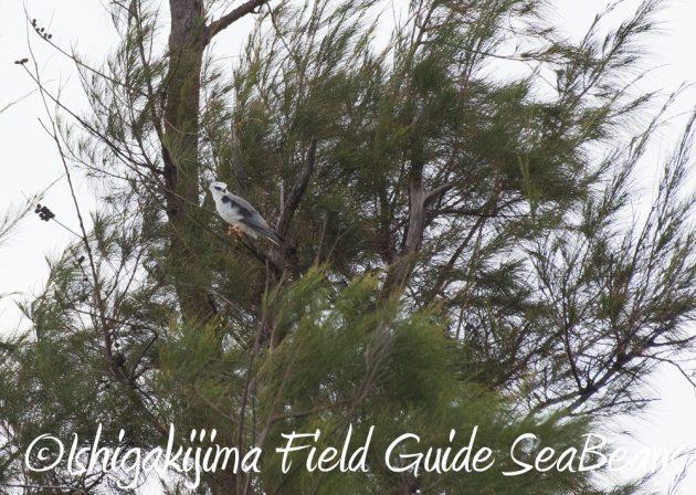 7.18 バードウオッチング 野鳥撮影 ガイド 10
