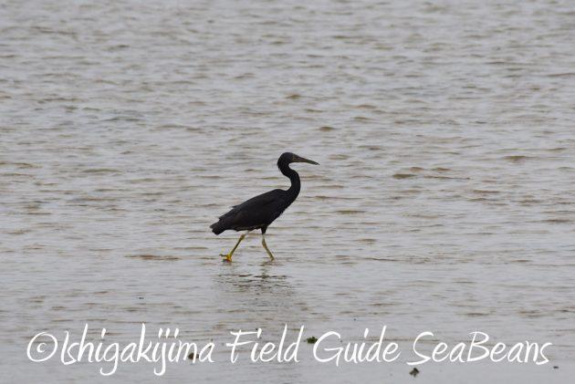 7.18 バードウオッチング 野鳥撮影 ガイド 8