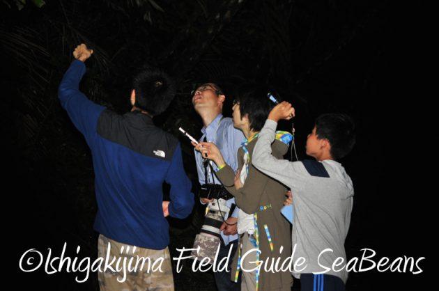 7月29日 石垣島ナイトツアー12