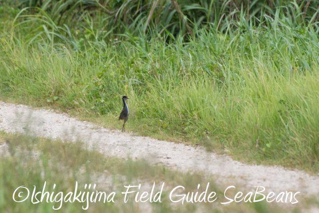 7.18 バードウオッチング 野鳥撮影 ガイド 11