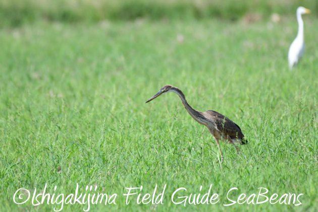 8月4日鳥獣保護区域等巡回調査9