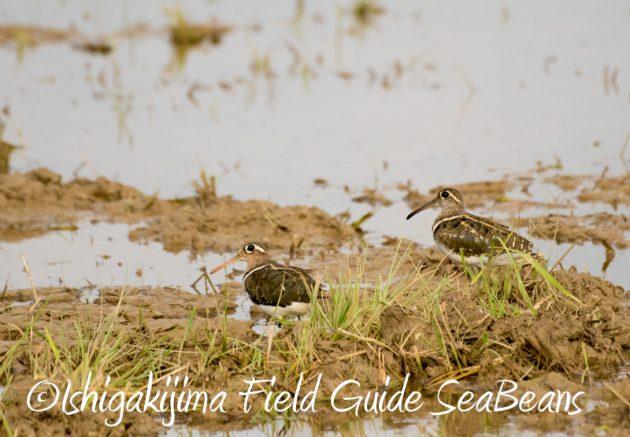 8月4日鳥獣保護区域等巡回調査1