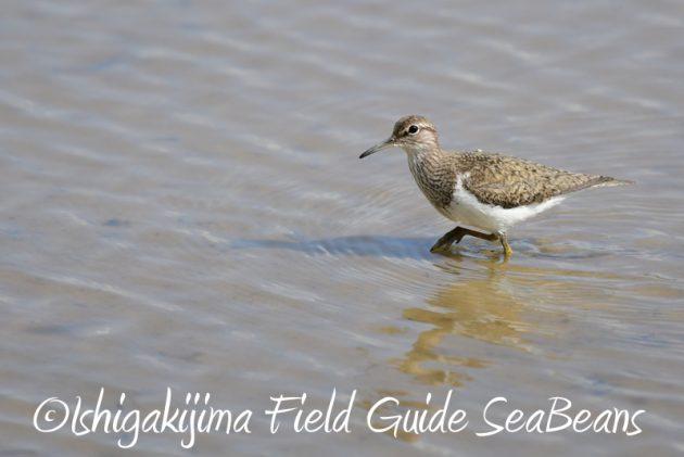 8月4日鳥獣保護区域等巡回調査5