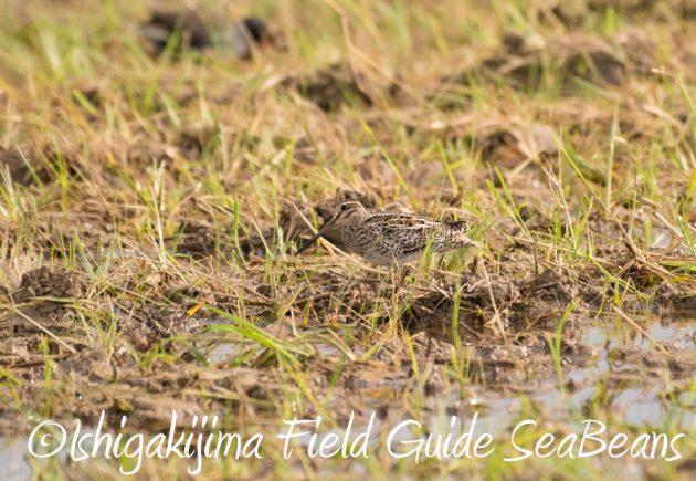 8月4日鳥獣保護区域等巡回調査4