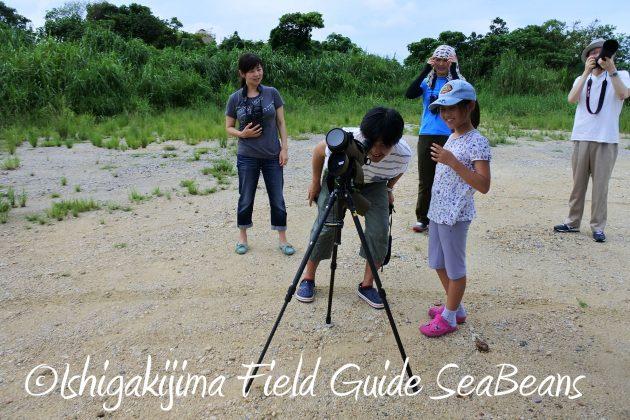 8月13日石垣島バードウオッチング&野鳥撮影2