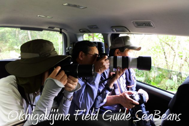 8月8日石垣島 バードウオッチング&野鳥撮影8