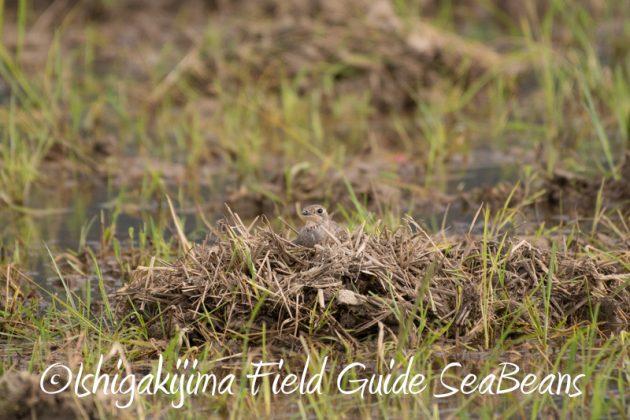 8月4日鳥獣保護区域等巡回調査2