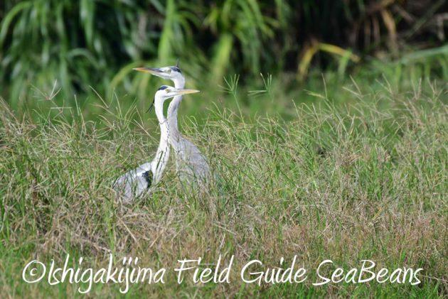 8月4日鳥獣保護区域等巡回調査8