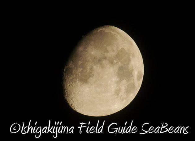 8月14日石垣島ナイトツアー18