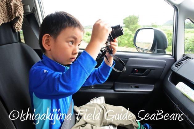 8月17日石垣島バードウオッチング&野鳥撮影11