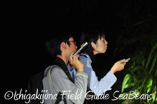 8月1日 石垣島ナイトツアー15