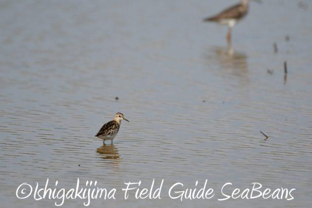 8月4日鳥獣保護区域等巡回調査7