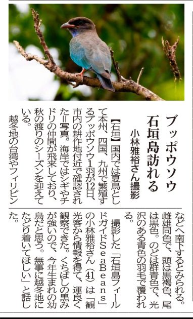 8月22日 沖縄タイムス ブッポウソウ