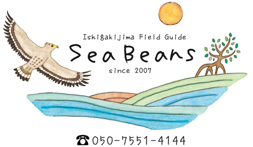 石垣島バードウオッチングガイド SeaBeans