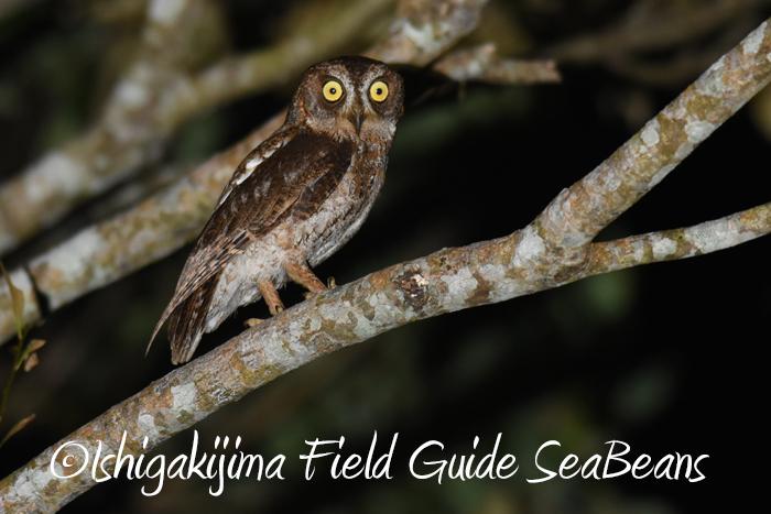 夜の野鳥撮影とバードウオチングのナイトツアー!!